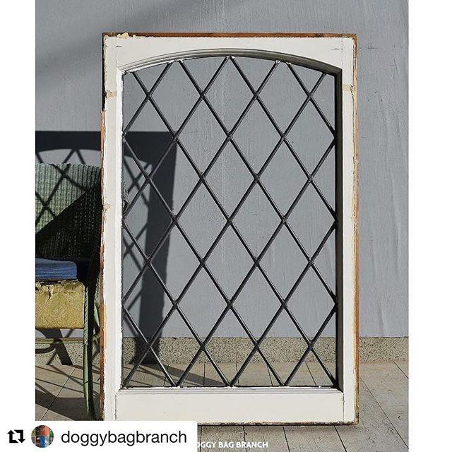 相方のお店、アンティーク窓祭りになってきました窓としてだけでなく立てかけて使えるサイズなのが嬉しいです!#Repost @doggybagbranch (Instagram)