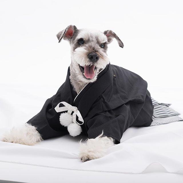あけましておめでとうございます。今年もクルンクルン共々よろしくお願いします^_^皆さまにとって素晴らしい一年になりますように♪.#dog #dogstagram #schnauzer #シュナウザー #シュナ #ミニチュアシュナウザー #miniatureschnauzer #くるんくるんは会長 #schnauzerlovers  #dogofthedayjp #instadog (Instagram)