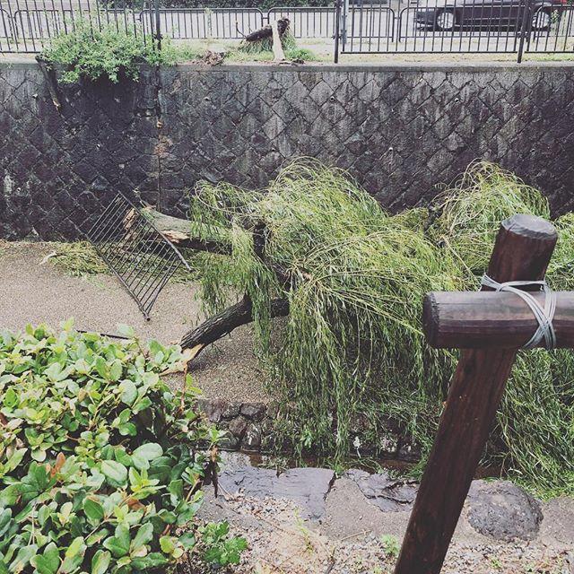 こんな爪痕を。。。近所の木々が。。。#京都市 #台風21号 #台風21号恐るべし (Instagram)